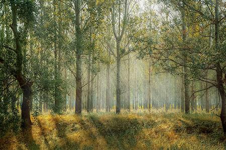 Det finns flera fördelar med att vistas i naturen och vildmarken.